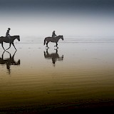 Horses Illegal On Beach